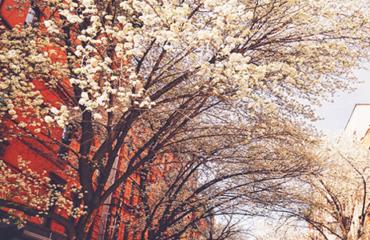 kevad linnas